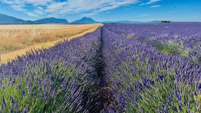 La Haute-Provence, terre de soleil, de beauté, de saveurs et de senteurs