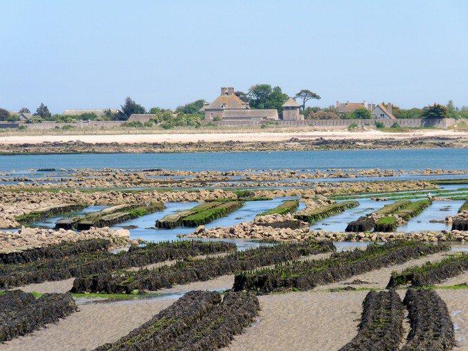 Tatihou, savourer une île du Cotentin - Voyager Magazine